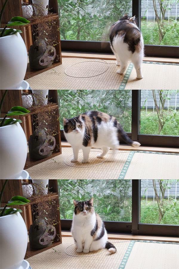 Ловушка для кошек сделать