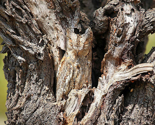 10 Extraordinary Camouflaged Animals  Unbelievable Facts