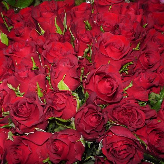 Много красных цветов