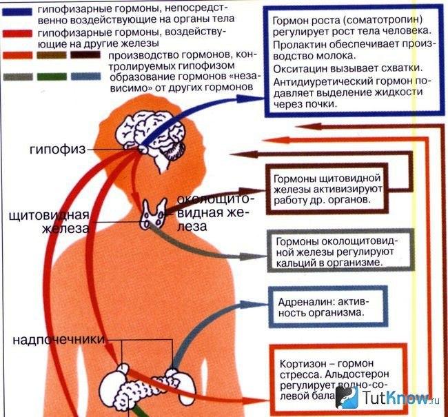 Нарушение гормонального статуса организма