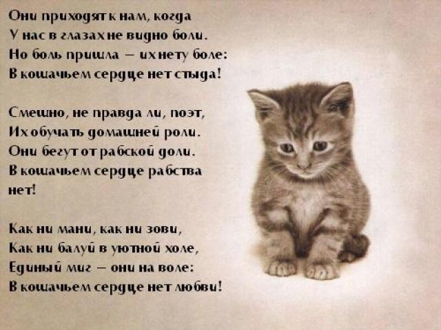 Стих наш любимый кот