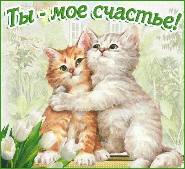 Котик я тебя люблю открытка 54