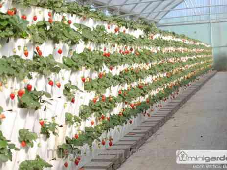 Вертикальное выращивание клубники в модулях