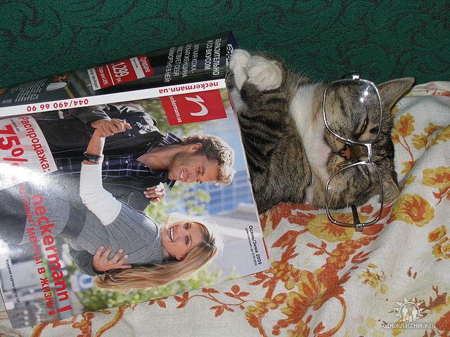сайты знакомств кошачьи