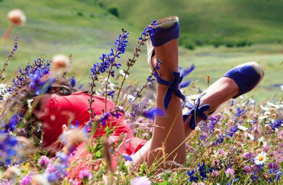 Красивые полевые цветы для девушки