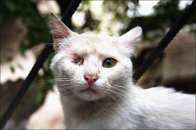 аудио запись уродливый кот аренде комнат квартирах