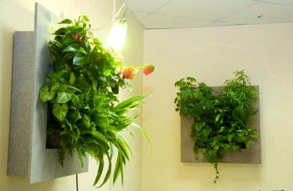 Цветы комнатные на стену