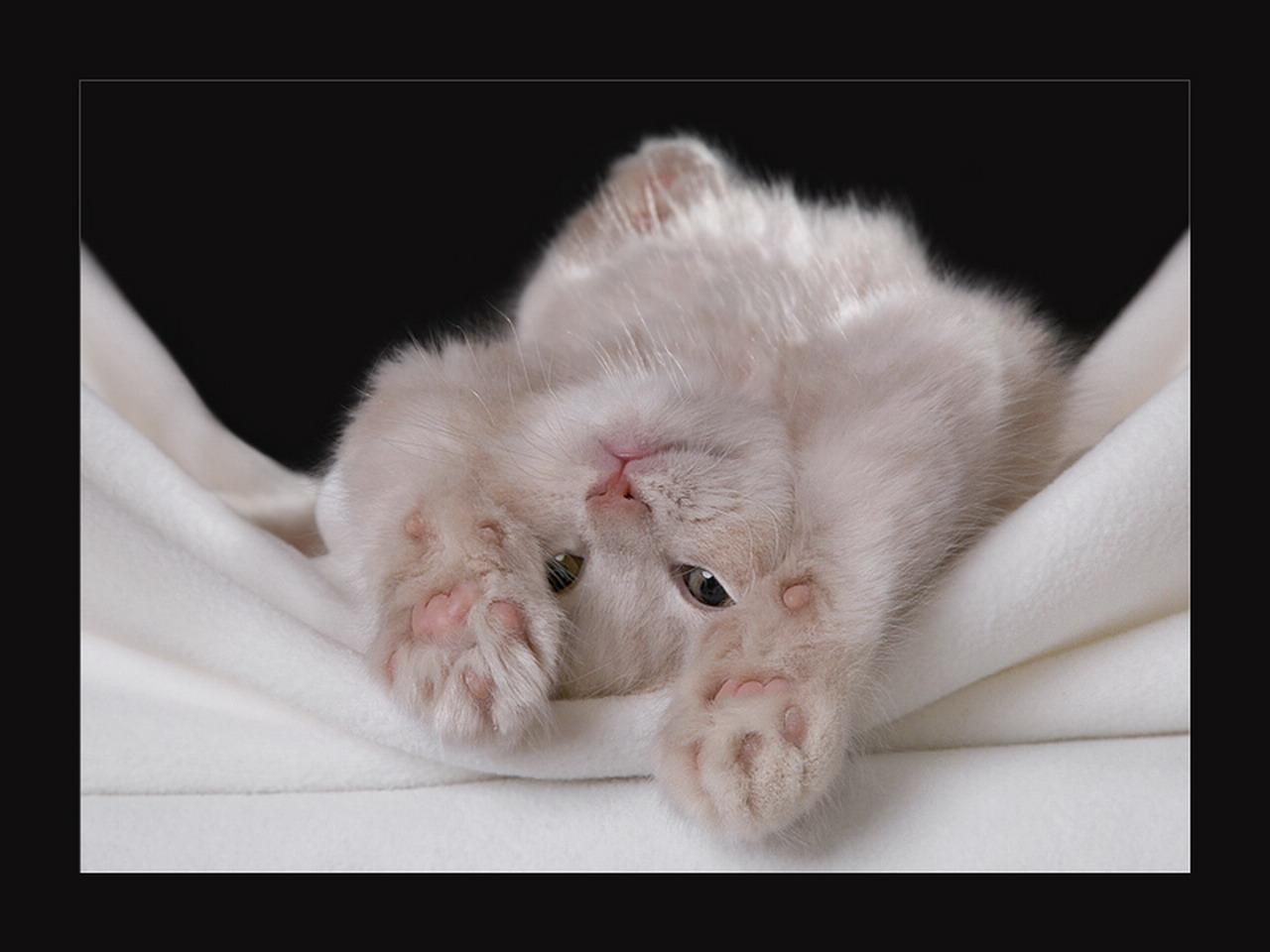 С Добрым утром, котенок! - гиф анимация 31