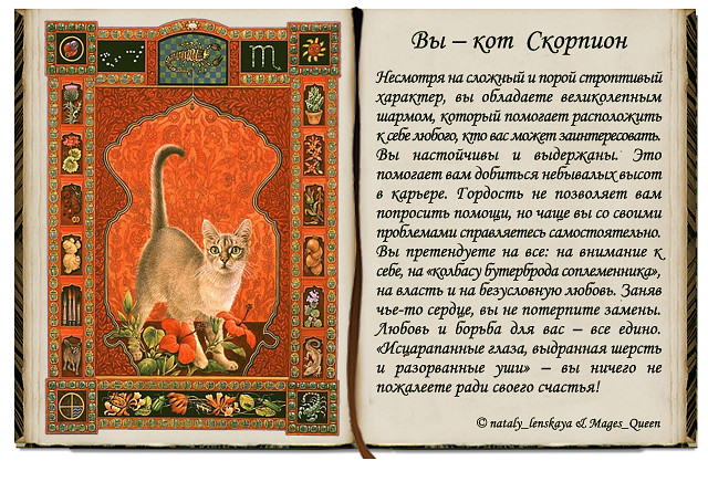 Знаменитости под знаком кота кролика