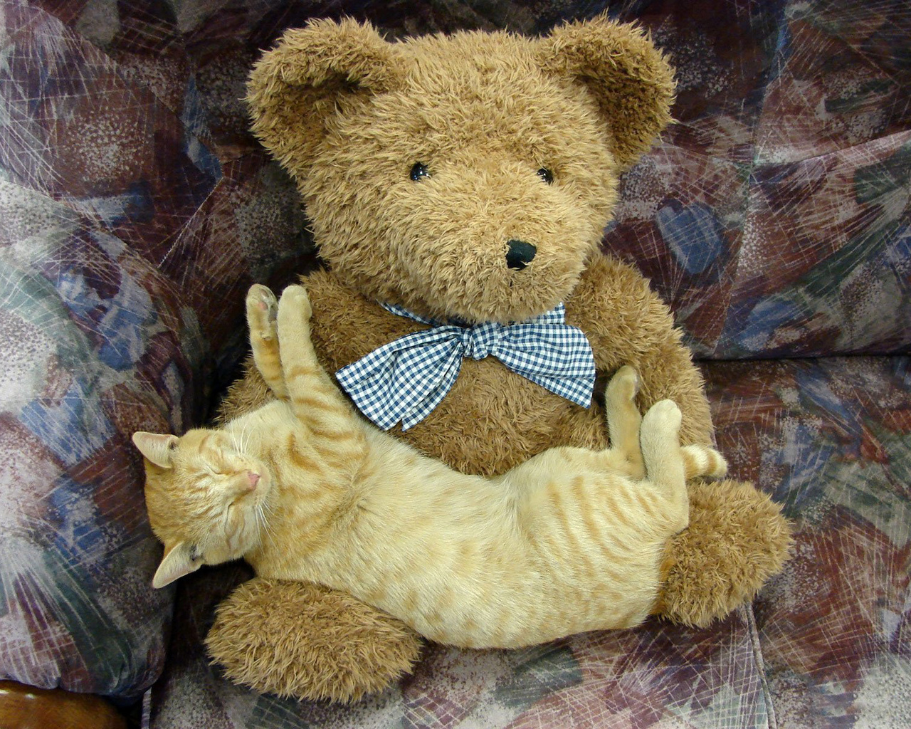 кликов картинки котиков и мишек имеет сизоватый