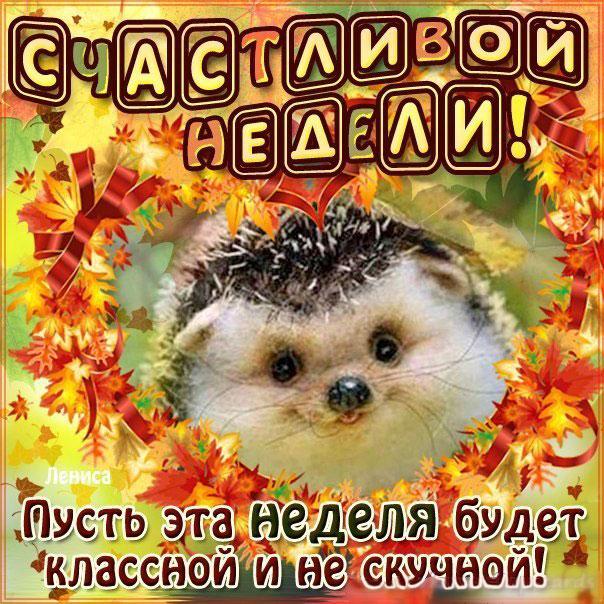 Прикольные, хорошие открытки с пожеланием доброго утра и хорошей недели
