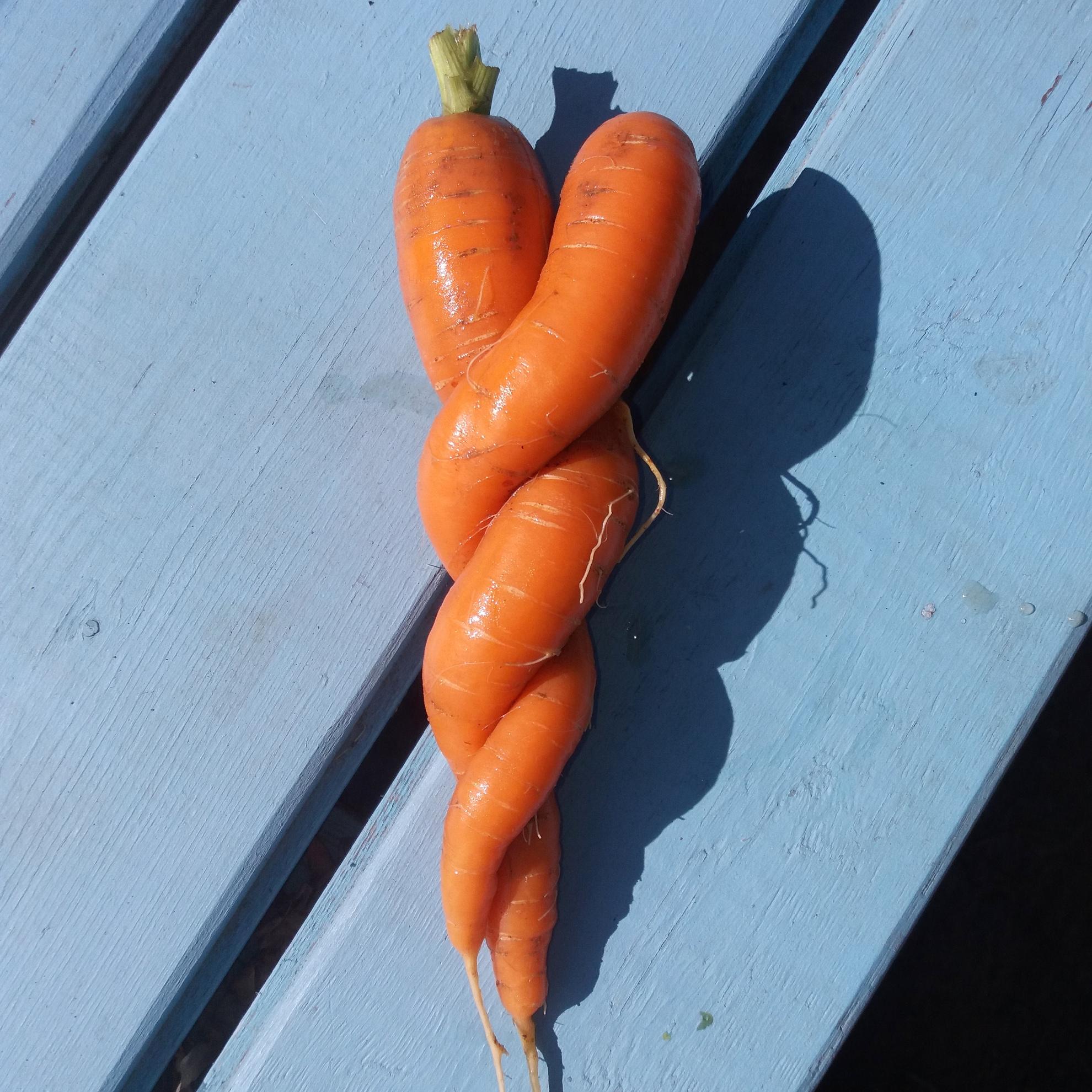lyubov-morkov-porno