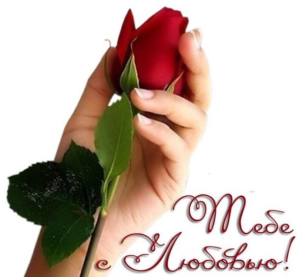 Открытки розы в руке