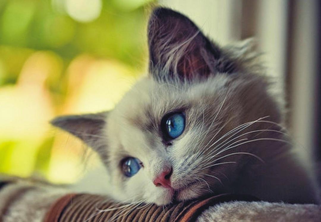 Открытки грустный котенок