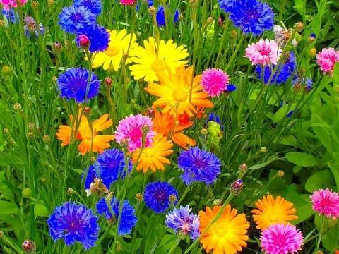 красивые цветы полевые фото