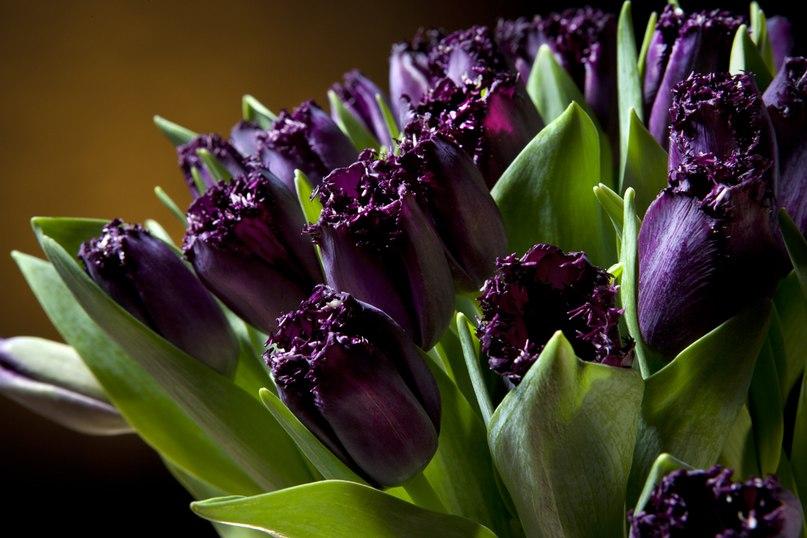 фото сирень и сиреневые тюльпаны фон