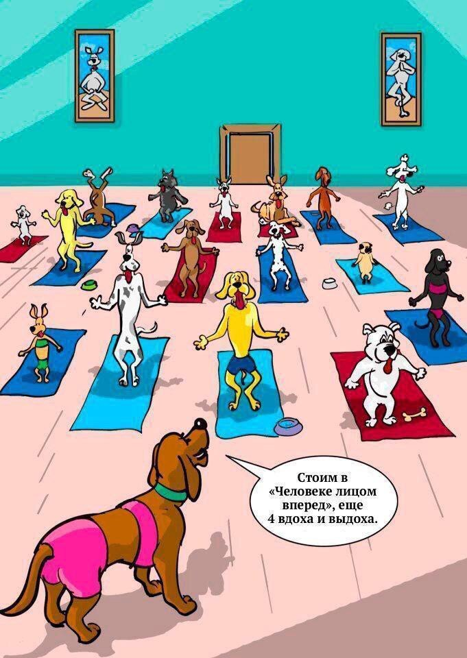 Картинки спокойной, смешная картинки про йогу