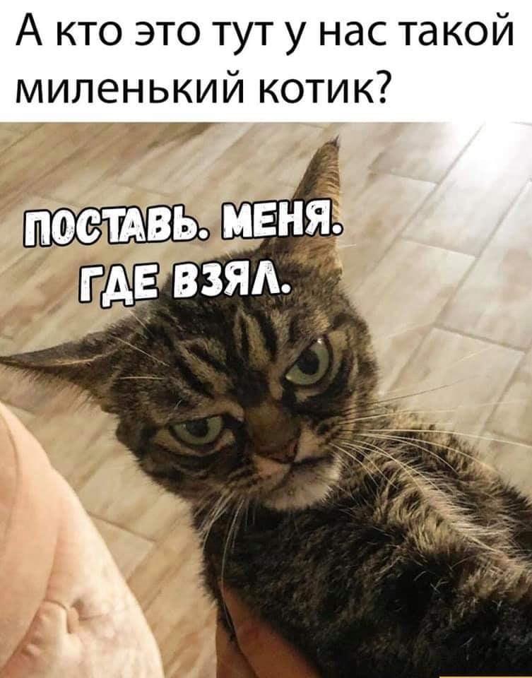 Мемы с котами картинки с надписями 2019