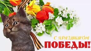 Анимация коты с днем победы, картинки надписью