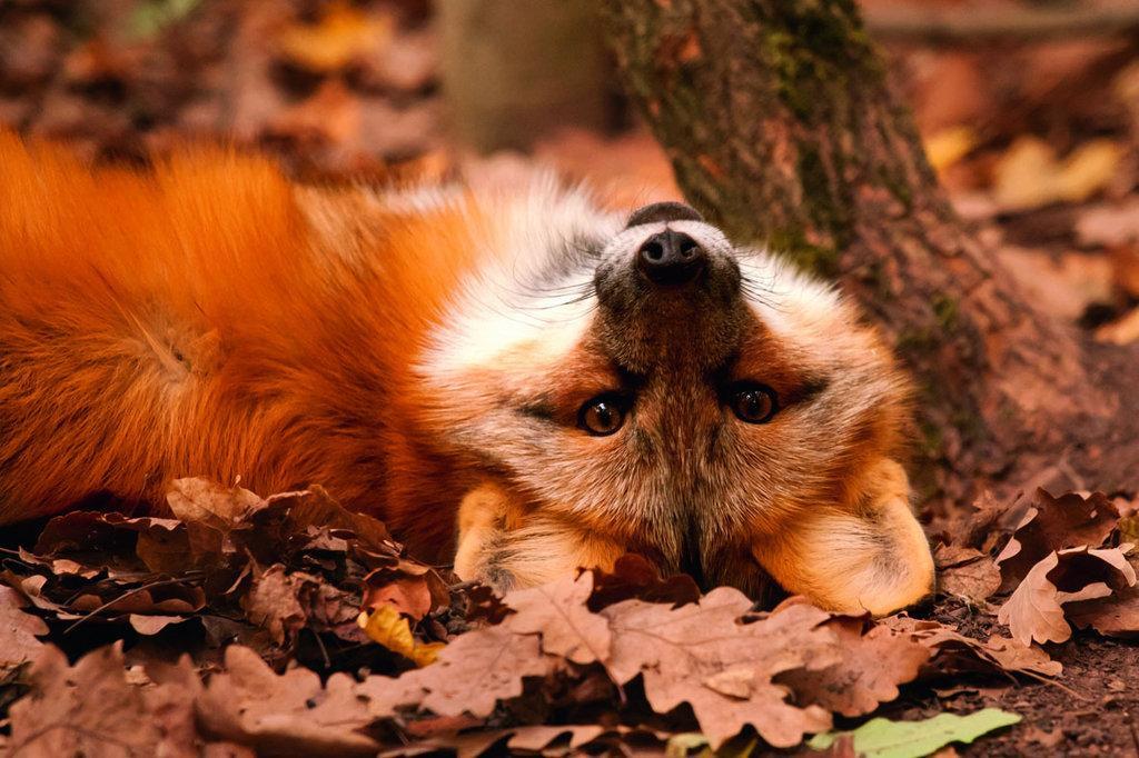 Животные осенью смешные картинки, святых
