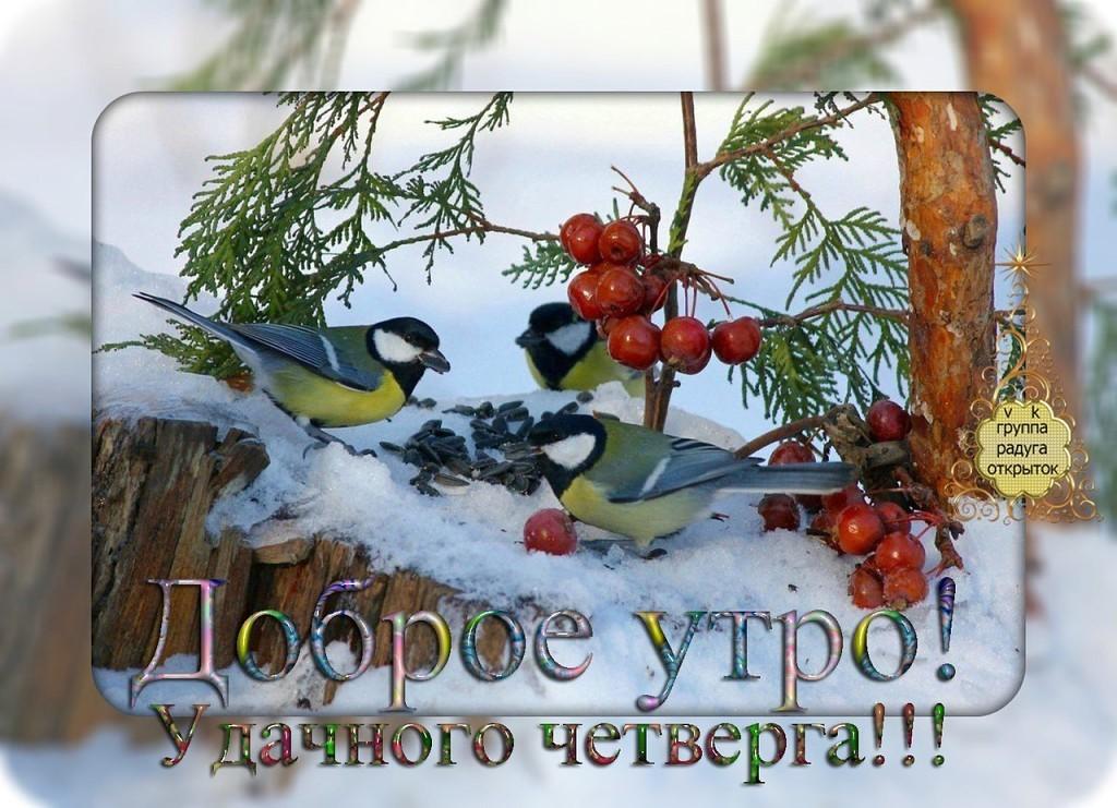 Смешные коты, открытки с добрым четвергом зимним