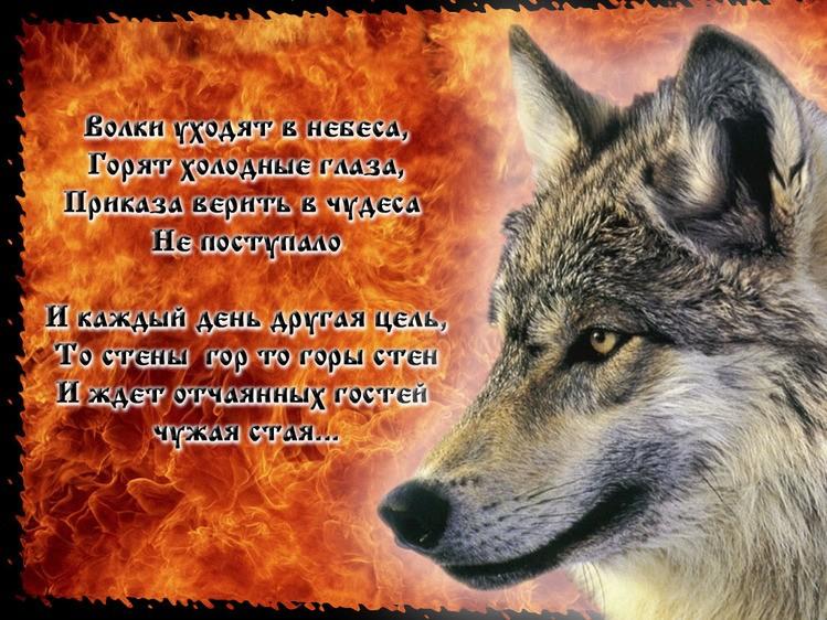 Стихами маме, красивые открытки с волками с цитатами